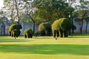 bushes-cut-to-animal-figures-elephants-in-the-park