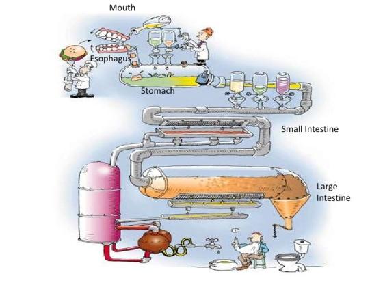 digestive-system-flow-chart-1-728